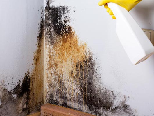 Asbestos Removal Lead Paint Amp Mold Removal Nyc Amp Long Island